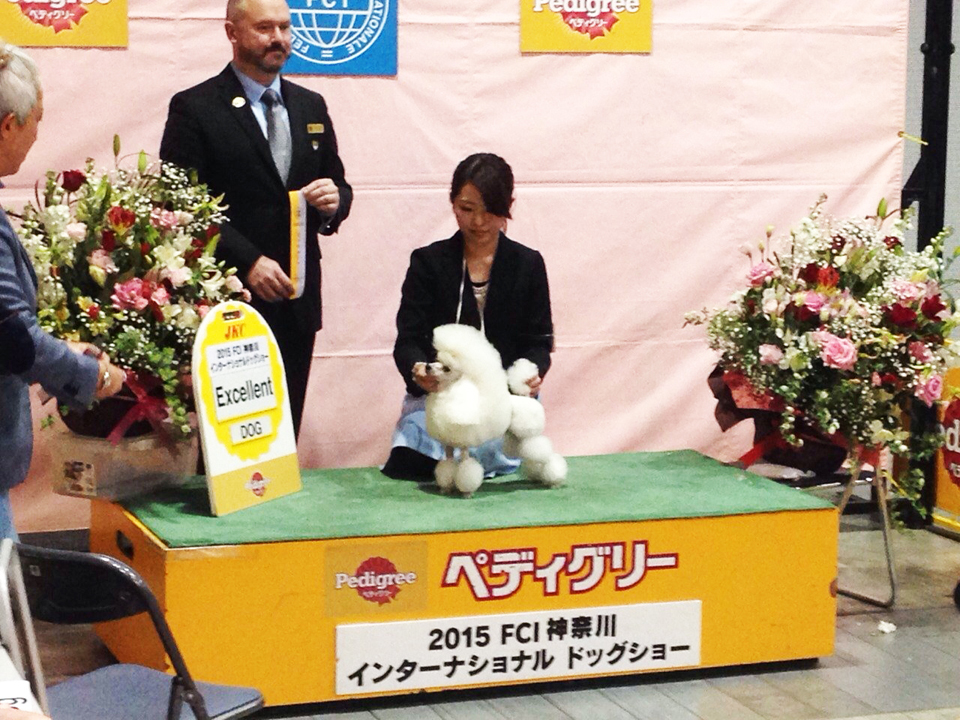 dog_show3